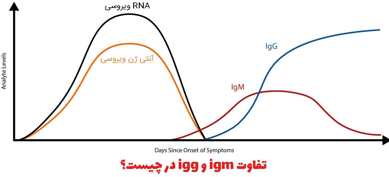 igg و igm چیست